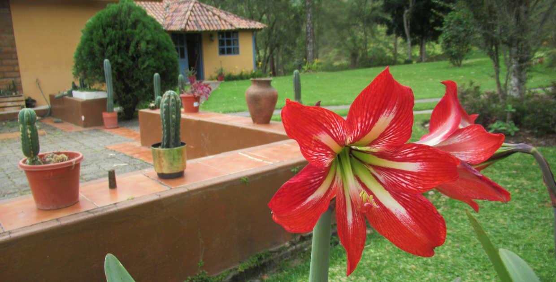 Retreats with San Pedro in Cuenca Ecuador